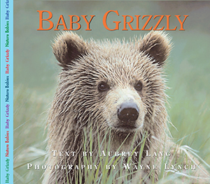 Baby Grizzly Bear