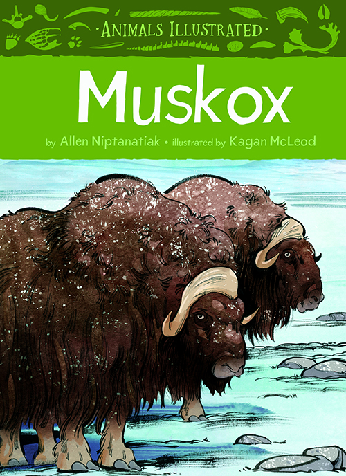 Animals Illustrated: Muskox