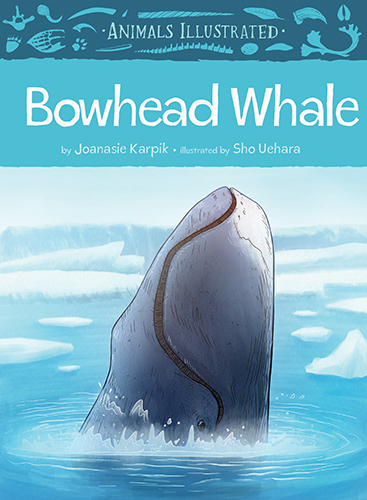 Animals Illustrated: Bowhead Whale (Inuktitut)