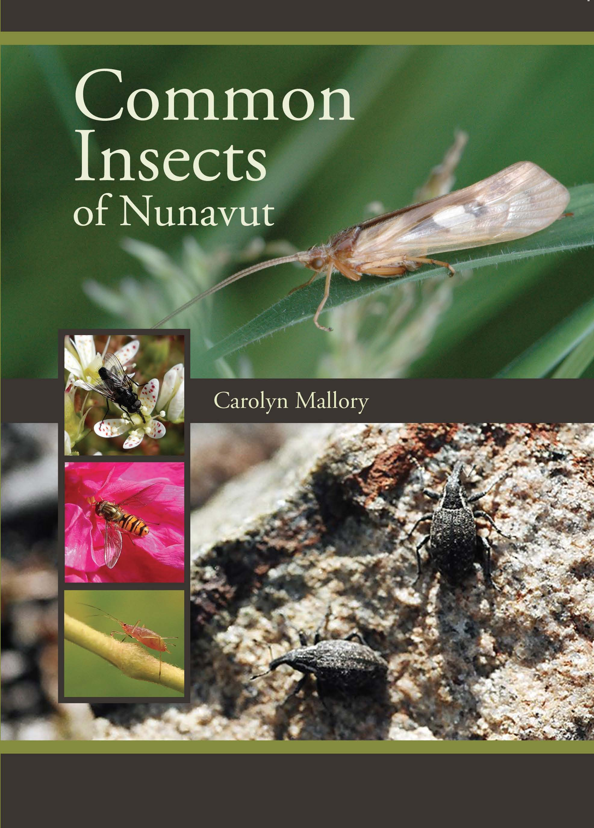 Common Insects of Nunavut