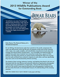 Polar Bears Flyer